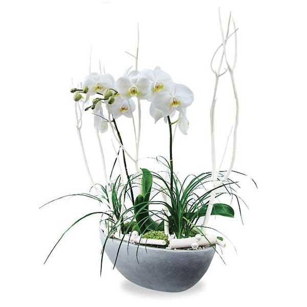 composition plantée orchidée