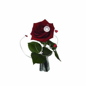 Rose rouge et Bracelet Roze